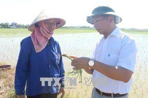 Chủ động bảo vệ cây trồng, vật nuôi trước nắng nóng kéo dài