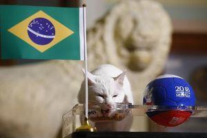 'Tiên tri' động vật dự đoán kết quả, tô điểm sắc màu World Cup