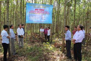 Ứng dụng TBKT trong trồng rừng thâm canh keo lai sản xuất gỗ lớn