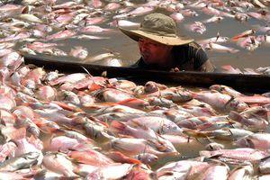 Dân La Ngà mỏi mòn chờ hỗ trợ sau vụ 1.900 tấn cá chết