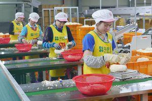 Sang Hàn Quốc làm nông thời vụ kiếm trăm triệu đồng