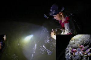 Trải nghiệm lội rừng ngập mặn bắt ba khía trong đêm ở Cần Giờ