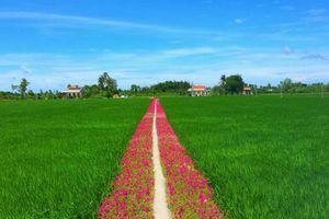 Con đường hoa 10 giờ giữa ruộng lúa đẹp quá sức tưởng tượng khiến dân mạng rầm rộ 'truy' địa chỉ để check in
