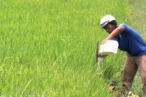 Tây Ninh: Nông nghiệp đứng 'đội sổ' trong cơ cấu kinh tế của tỉnh