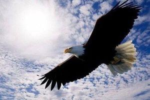 Loài chim ăn thịt khổng lồ mệnh danh 'chúa tể bầu trời'
