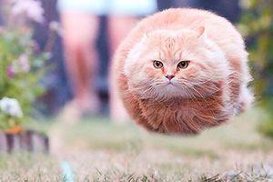 Những khoảnh khắc hài hước trong loạt ảnh 'đúng mèo đúng thời điểm'
