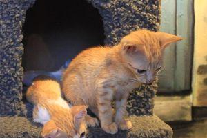 Quán cà phê nuôi đầy mèo hoang ở TP.HCM