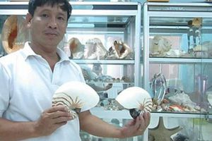 'Bộ sưu tập' hơn 1.000 loài ốc biển cổ, quý hiếm của HLV bơi lặn