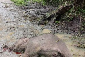 Voi rừng chết trong Vườn Quốc gia Yok Đôn