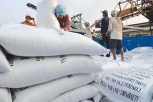 Thắng thầu 60.000 tấn gạo Japonica sang Hàn Quốc, vẫn chưa hết lo