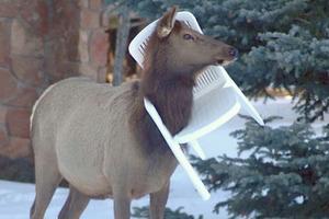 Cười ngất với những pha tai nạn hài hước khó đỡ của động vật