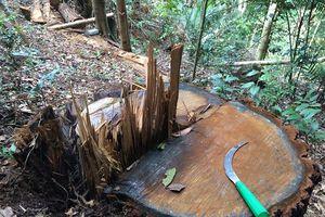 Lập chuyên án điều tra vụ phá rừng bên suối Đắk Rờ Tiên