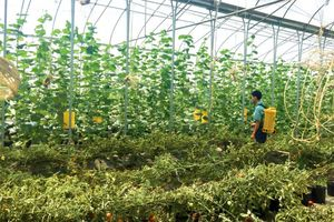 Chú trọng đảm bảo an toàn thực phẩm trong nông nghiệp