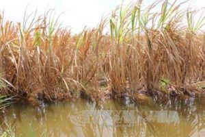 Biến đổi khí hậu: Nước mặn xâm nhập ngay giữa mùa mưa