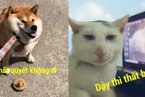 12 bức ảnh thú cưng khiến bạn cười đau cả bụng