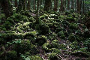 'Rợn tóc gáy' khu rừng tự sát ở Nhật Bản