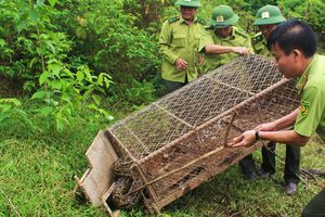 Thả con trăn gấm được nuôi 8 năm về lại tự nhiên