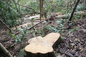 Đề xuất khởi tố hình sự vụ 7 đối tượng phá 10,5 ha rừng