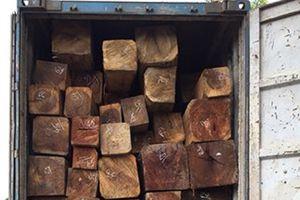 Gia Lai: Bắt tạm giam phó giám đốc vận chuyển gần 45m3 gỗ lậu