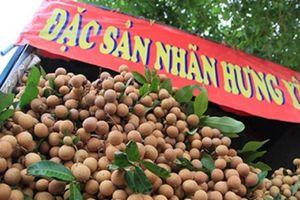 Sự thật đằng sau quả 'nhãn lồng Hưng Yên' đang bày bán nhan nhản ở Hà Nội