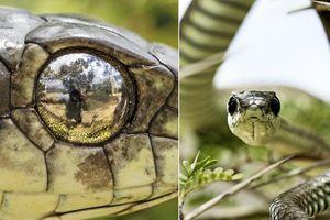 Lấy mắt rắn độc làm gương, nhiếp ảnh gia làm điều kinh khiếp này