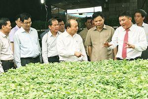 Thủ tướng thăm mô hình sản xuất rau an toàn ở Lâm Đồng