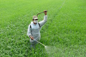 Tồn dư thuốc bảo vệ thực vật trong máu nguy hiểm thế nào?
