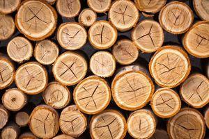 Vua gỗ Trường Thành lại lỗ nặng vì hàng tồn