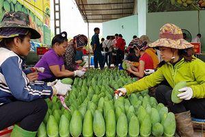 Sơn La: Xuất khẩu nông sản 7 tháng đầu năm 2018 đạt 83 triệu USD