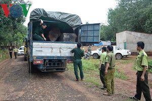 Điều tra vụ tài xế chở gỗ trái phép trốn khỏi hiện trường