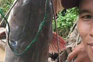 Nghẹt thở vào mùa săn cá lăng dưới dòng Sê San