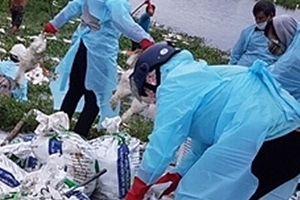 Dịch cúm gia cầm tái phát tại Hải Phòng