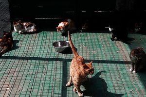 Chú mèo bị bắt khi đang vận chuyển ma túy vào tù
