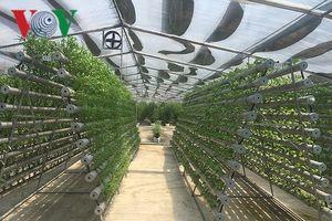 Bà Rịa-Vũng Tàu: Tìm quỹ đất cho phát triển nông nghiệp công nghệ cao