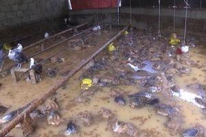 Mưa lớn gây thiệt hại nặng tại Cao Bằng, nhiều hộ dân bị cô lập