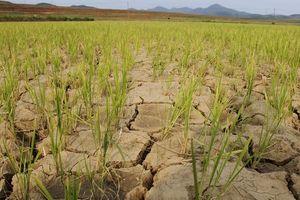 Triều Tiên lo về 'thảm họa thiên nhiên lớn chưa từng thấy'