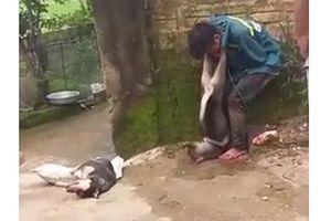 Tin mới vụ trộm chó bị người dân đánh hội đồng, treo chó vào cổ