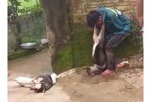 Trộm chó, nam thanh niên bị người dân treo chó lên cổ