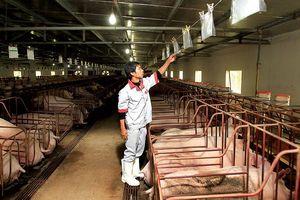 Khủng hoảng thịt lợn và 'gót chân Achiles' của ngành nông nghiệp Việt - Bài cuối: Thời của nông nghiệp thông minh