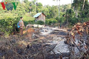 Khởi tố vụ án hủy hoại 5.600 m2 rừng sản xuất ở Gia Lai
