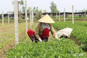 Sản xuất nông nghiệp theo hướng nâng cao giá trị gia tăng và phát triển bền vững