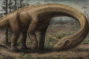 Loài khủng long lớn nhất từng tồn tại trên Trái Đất
