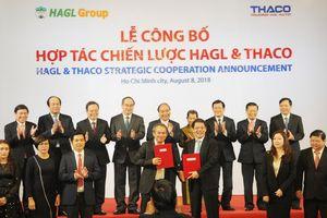THACO đầu tư 1 tỷ USD vào Hoàng Anh Gia Lai
