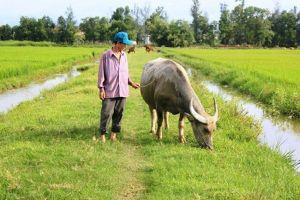 Vụ phải nộp phí để được nuôi thả gà, vịt: Phát hiện thu tiền 'dẫn nước vào ruộng'