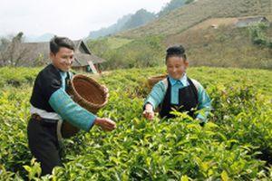 Hiệu quả từ công tác kiểm tra, giám sát ở huyện Mộc Châu