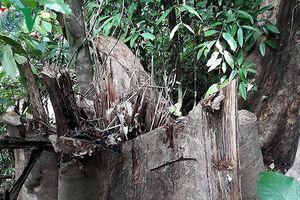 Vụ phá rừng qui mô lớn ở Bình Định: Lại đùn đẩy trách nhiệm?