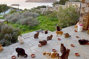 Sống miễn phí trên đảo Hy Lạp: Chỉ cần giỏi trông mèo