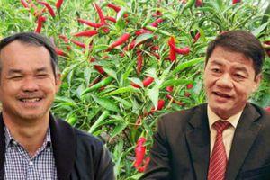Thaco sắp cử người vào quản trị công ty của bầu Đức?