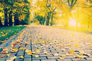 Mùa thu trong mắt thi nhân
