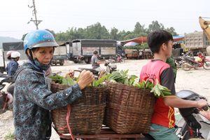 Cận cảnh chợ na lớn nhất miền Bắc ở Lạng Sơn tấp nập vào vụ
